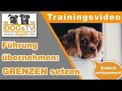 Hundeerziehung Fuhrung Ubernehmen Hund Richtig Grenzen Setzen Frustrationstoleranz Erhohen Youtube Hundeerziehung Welpen Erziehen Hunde Erziehen