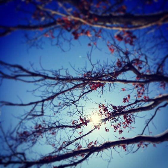 #WonderWatch 2015-14 Sunspot #TreesPlease 3