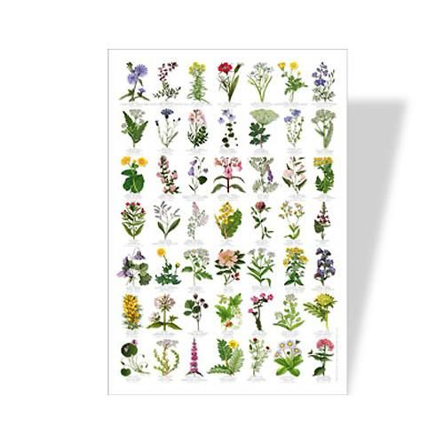 Wonderful Flower Poster for Kids. Learn about 49 common wildflowers with this wonderful poster. Children's Learning Ideas.