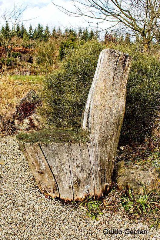 Totholz Als Gartenmobel Wildbienenschutz Im Naturgarten Garten Naturgarten Gartengestaltung