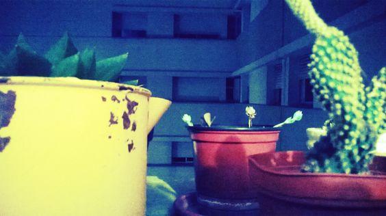 ventana/jardin