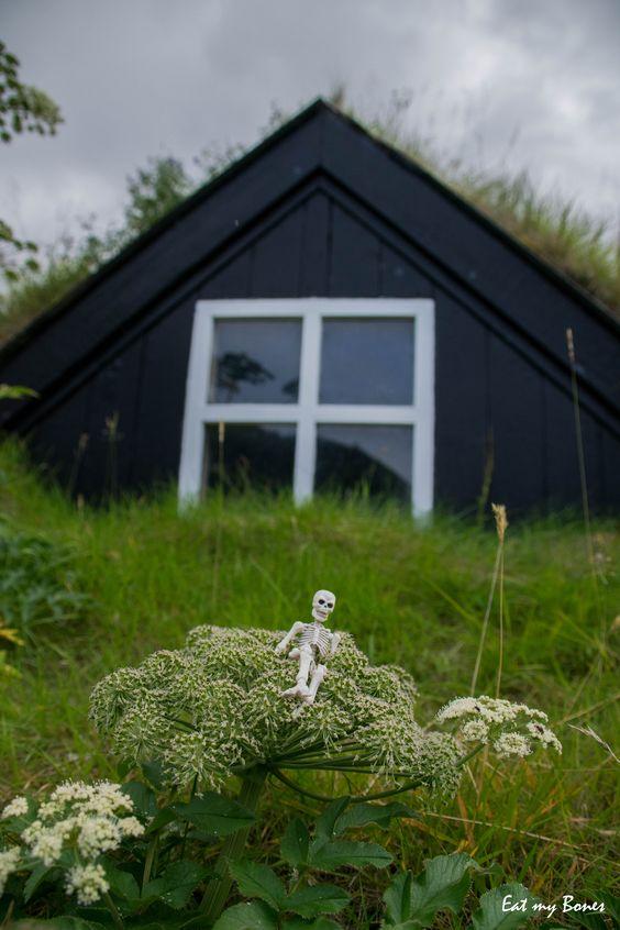Eat my Bones - Iceland 2016 - #poseskeleton #skeleton #rement #toy #miniature #toyphotography #iceland