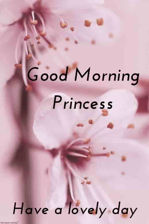 Best Good Morning Hd Images Wishes Pictures And Greetings Good Morning Wallpaper Good Morning Images Good Morning Romantic