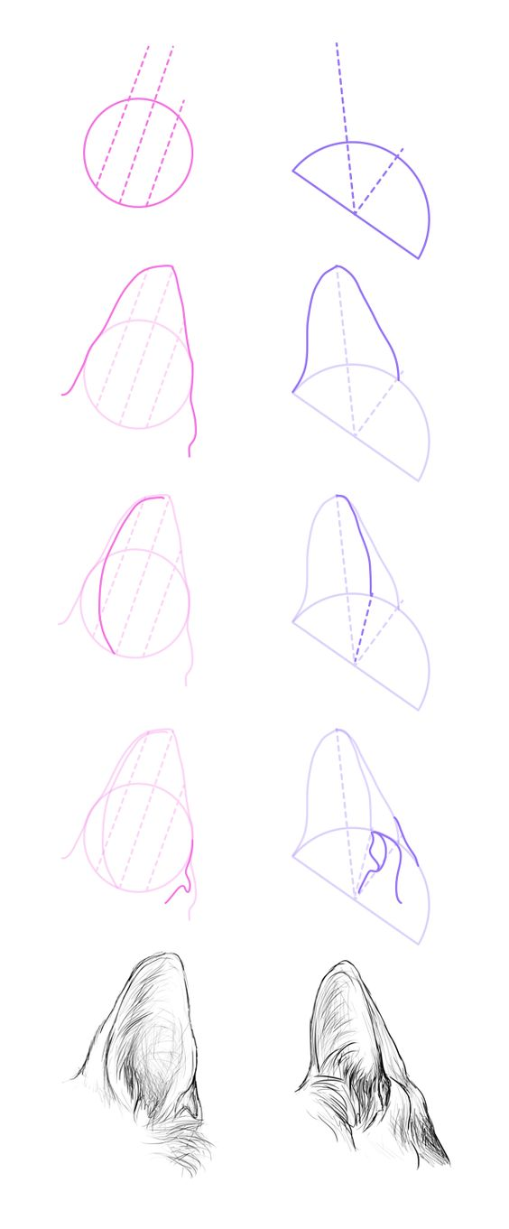 How to draw wolf ears - photo#13