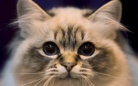 cute cats - Yahoo Search Results Yahoo Canada Image Search Results