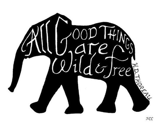 Elephant Good Luck Quote: Pinterest • The World's Catalog Of Ideas