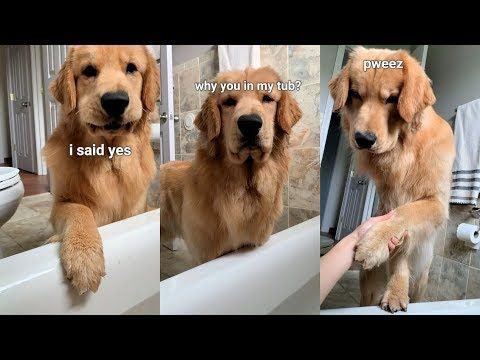 Dog Follows Me Into Bathroom Youtube Dogs Dog Pictures Cute Dogs