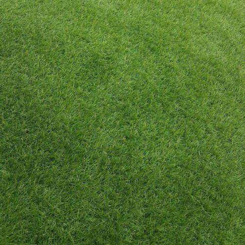 Kunstrasen Moorava Selsey Living Grosse 200 Cm B X Kunstrasen Kinderfreundlicher Garten Rasen