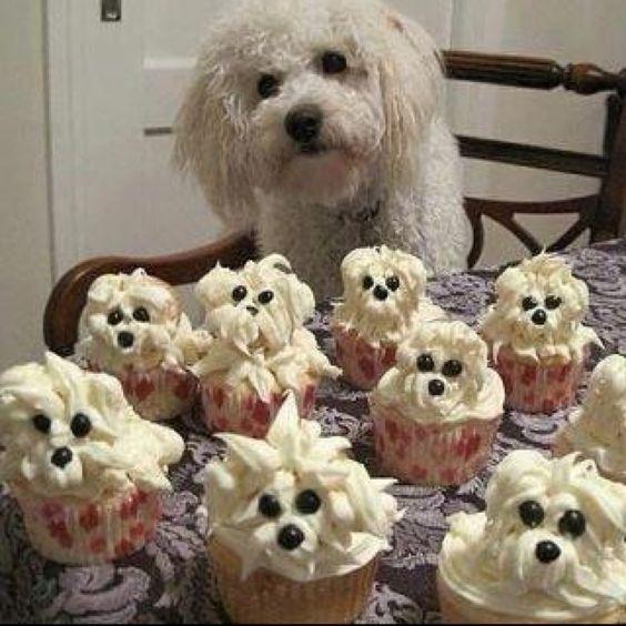 Owww too cute  The cupcakes look more like Westies