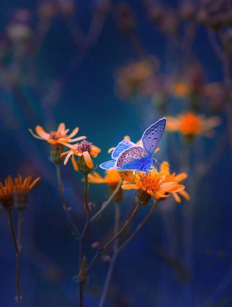 Butterfly by Mevludin Sejmenovic
