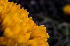 Early Spring Flower IV