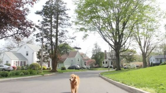 Don't want to walk your dog, let a drone do the work, but the video is sort of fake | KNLive