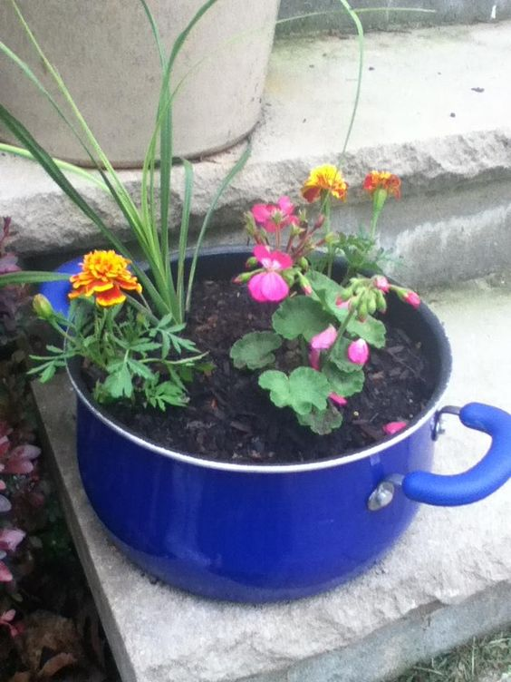 Old pot converted into a flower pot.