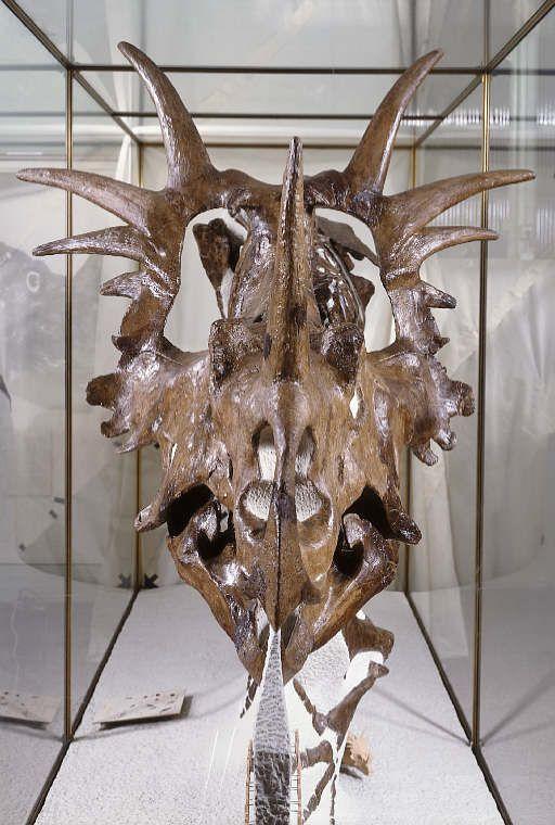Study paleontology ireland