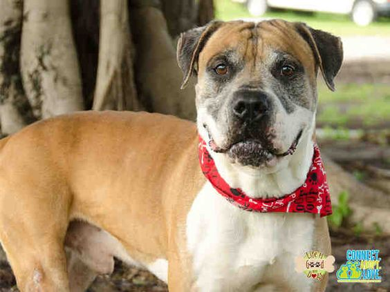 Adopt Small Dogs Miami