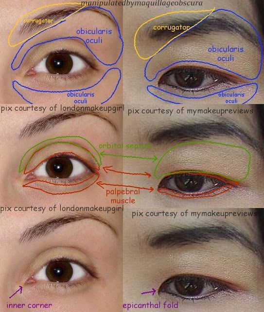 asian eye structure