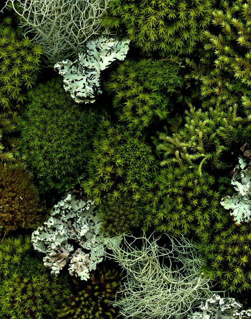 53902 moss and lichen by horticultural art on Flickr, via http://valscrapbook.tumblr.com/post/48998093586: