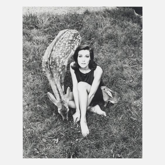 {she sat alongside the deer & the hare} photograph by Wingate Paine