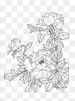 Flower Clipart Line Clipart Peony Line Drawing Artwork Meticulous Chinese Style Line Drawing Chinese Style Peon Flower Line Drawings Line Drawing Peony Drawing