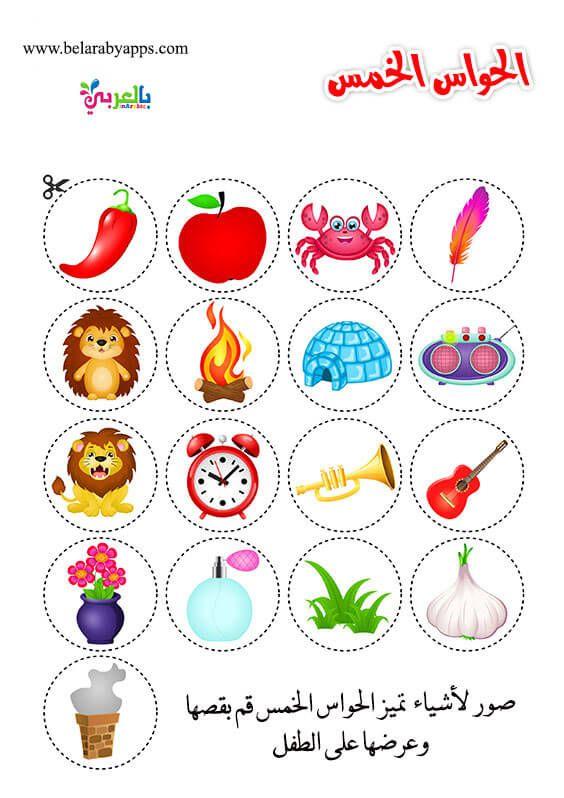 انشطة عن الحواس الخمس للأطفال Senses Preschool Five Senses Preschool Senses Activities