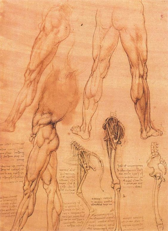 Page: Studies of legs of man and the leg of a horse    Artist: Leonardo da Vinci    Completion Date: c.1506    Place of Creation: Milan, Italy    Style: High Renaissance    Genre: sketch    Technique: chalk, ink    Material: paper    Dimensions: 28.5 x 20.5 cm    Gallery: The Royal Collection, Windsor-Castle, Windsor, UK    Tags: human-anatomy, parts-of-human-body