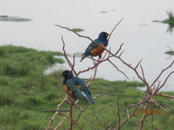 bird beauties