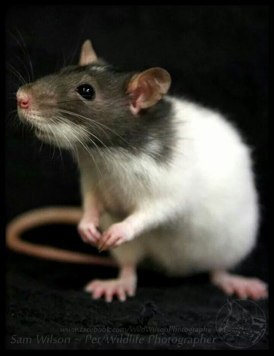 This little guy reminds me of my Bonzo, except he is not as round !