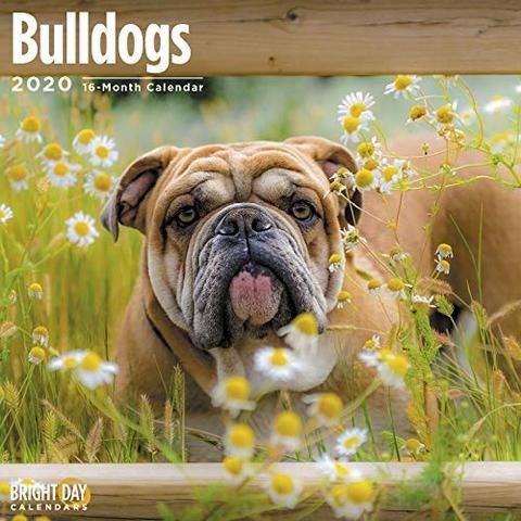 Bulldogs 2020 Calendar 2020 Bulldog Calendar Commonly Referred