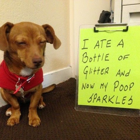 Misbehaving Dogs Great For Instagram Memes Bad For Maintaining Sanity At Home Teach Your Dog Some Manners Animal Shaming Funny Animal Pictures Dog Shaming