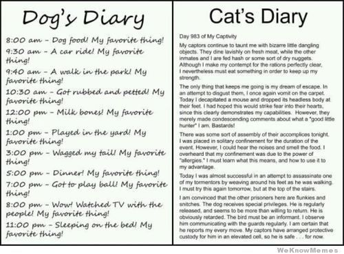 Hilarious!!! This is my cat
