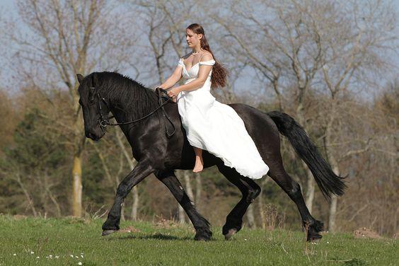 http://www.pferd.de/threads/514543-mit-morwens-auge-ferne-laender-wilde-tiere/page523