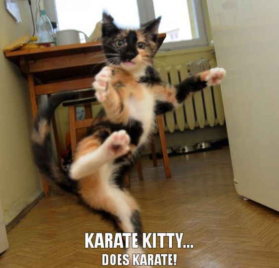 KarateKittyDoesKarate - http://blog.hepcatsmarketing.com - check out our blog network for more cute and funny stuff like this!