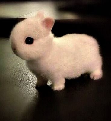 the cutest bunny in the world bunnies pinterest