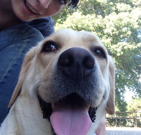 the most beautiful dog in the world...Nikki , my lab...:)