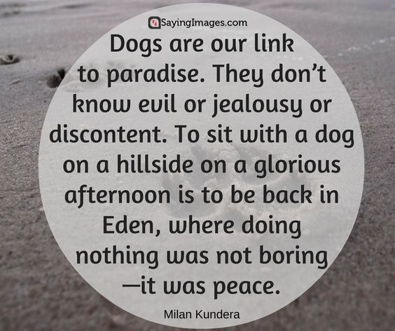 50 Dog Quotes For People Who Love Dogs #sayingimages #dogquotes #lovedogs