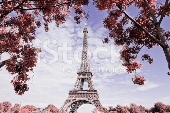Eiffel tower - fotografia de stock royalty-free