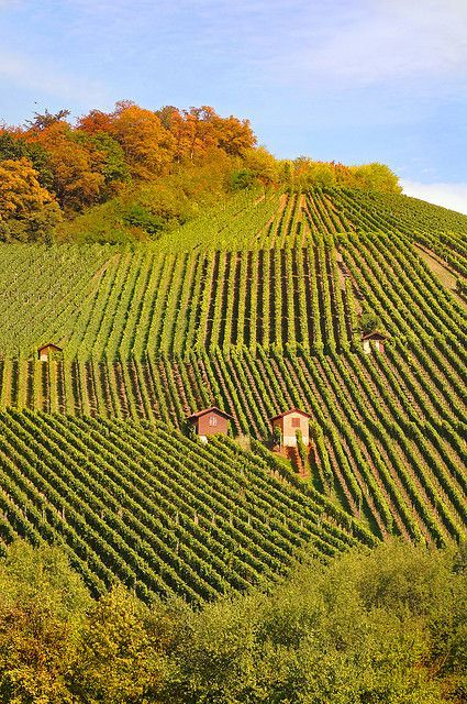 Vineyard hill - Baden-Wurttemberg, Germany Premium wines delivered to your door.  Get in. Get wine. Get social.