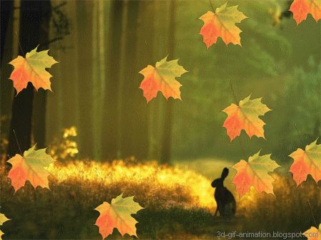 Animated gif autumn leaves and wallpapers on pinterest