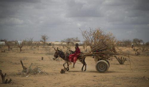 Dadaab, Kenya, Octobre 2011    Le camps de Dadaab est le plus grand camps de réfugiés au monde. Pas moins de 500000 somaliens vivent dans ce camps des Nations Unis, par Olivier Voisin