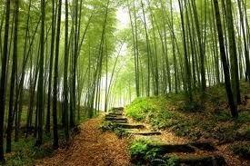 Path near Lenare Castle