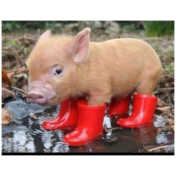 I have muck boots just like these. Not really lol | Pets