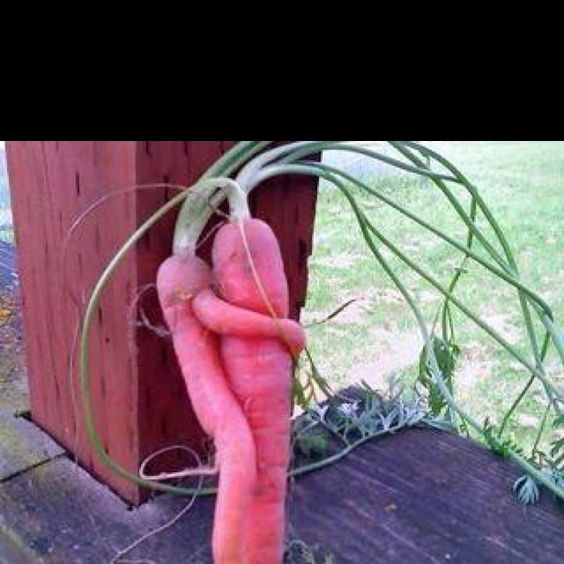 Twisted carrots, got to love them.