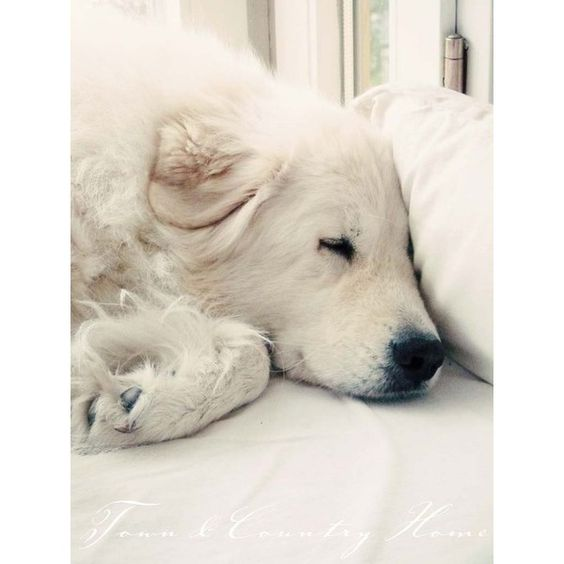 Shades of sand, beige white grey ❤ liked on Polyvore featuring animals, dogs, backgrounds and white