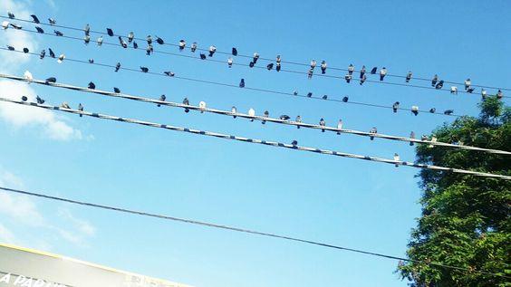 Pássaros  curtindo a paisagem!