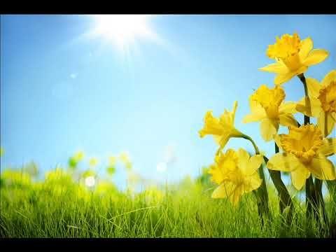 فيروز يسعد صباحك يا حلو Youtube Spring Wallpaper Garden Show Spring Garden