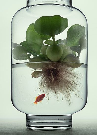 Plant in a jar filled with water and a fish.