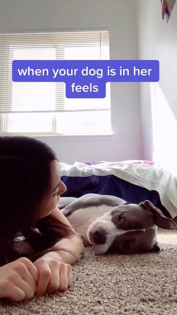 Pin By Gabriella Reese On Tiktok Dog Memes Your Dog Pitbulls