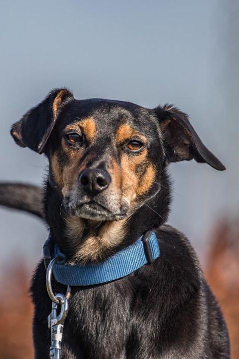 Untitled Mit Bildern Tierschutz Hunde Hunde Tiere