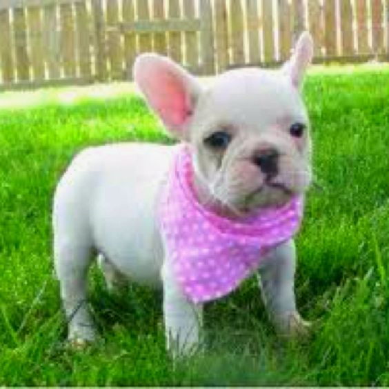 I need this pooch.