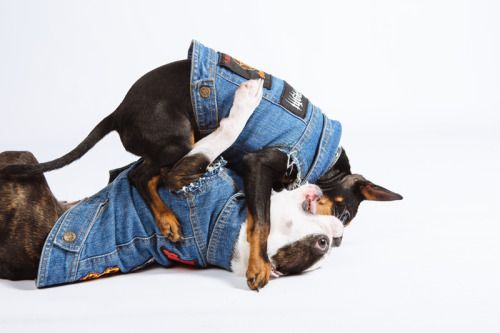 Ruff n tumble in custom dog battle jackets.